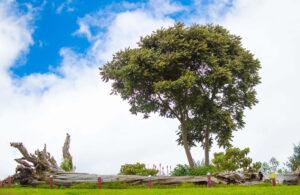 Imagen de El Árbol de los Sueños, fuente de premoniciones